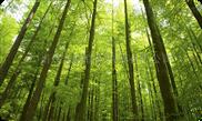 名贵树木防盗电子围栏管理系统 V1.2