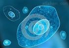 小脑颗粒细胞和肿瘤原代细胞提取物图片